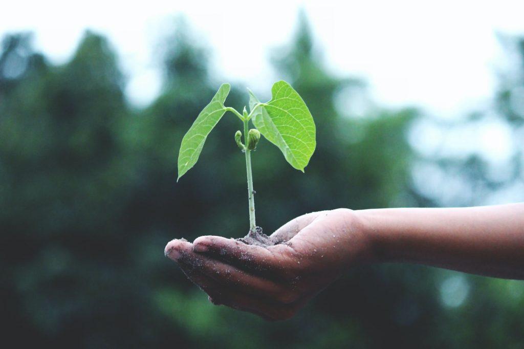 Link2incube.com - Seed Capital